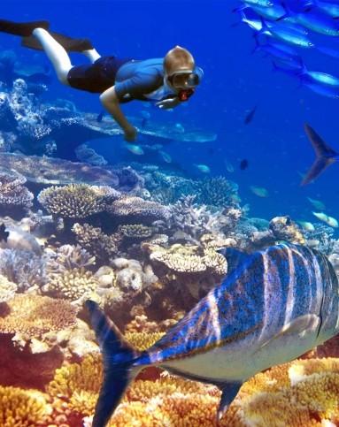 壁纸 海底 海底世界 海洋馆 水族馆 桌面 383_483 竖版 竖屏 手机