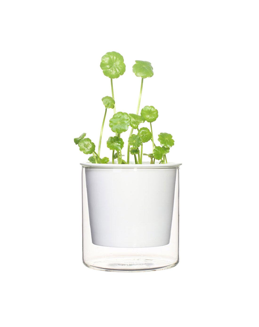 陶瓷玻璃一体花盆