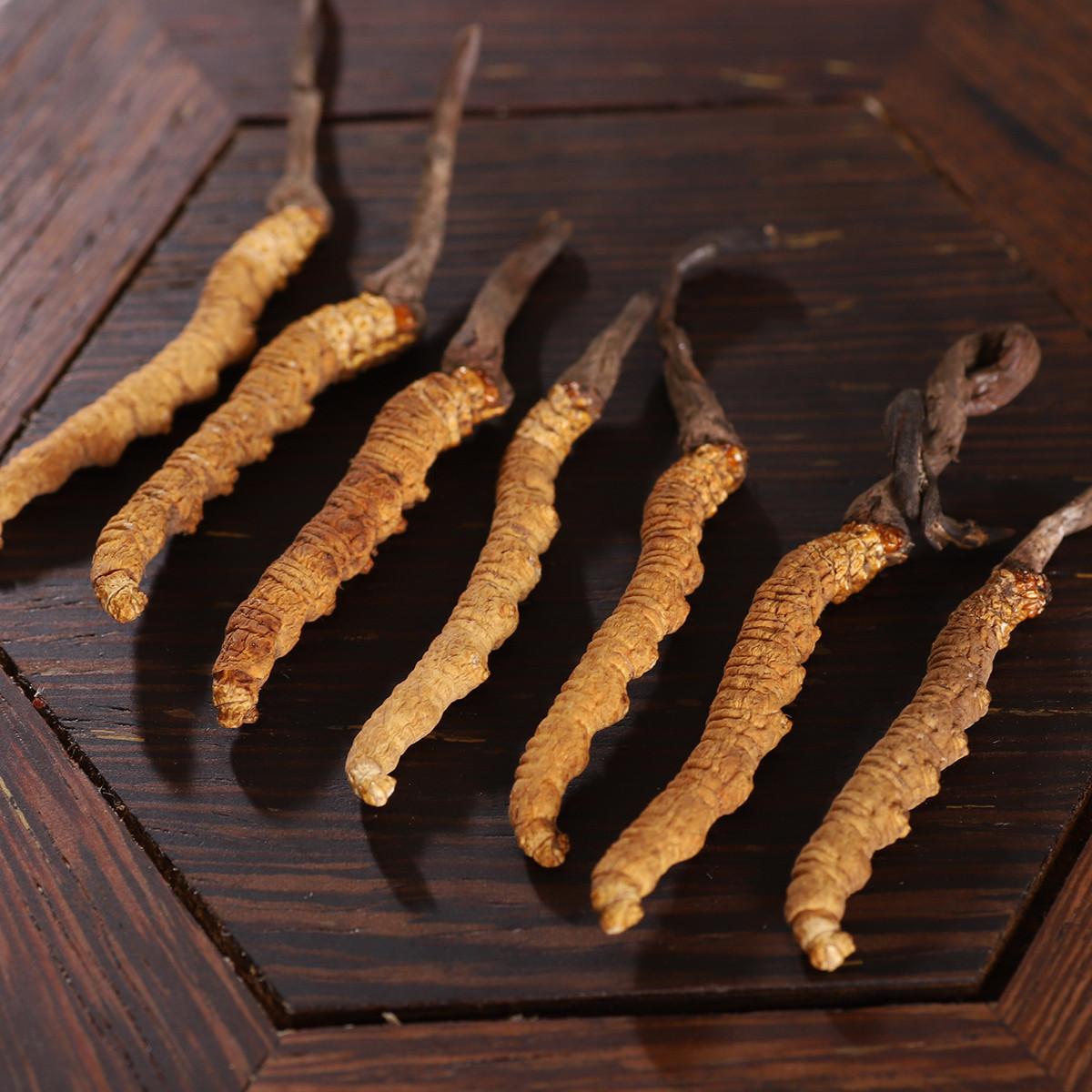 蓝の灵冬虫夏草(中)10g 西藏那曲正宗虫草(30-40条)COLOR其它颜色