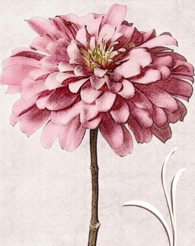 粉色绣球花 复古风格花朵装饰画
